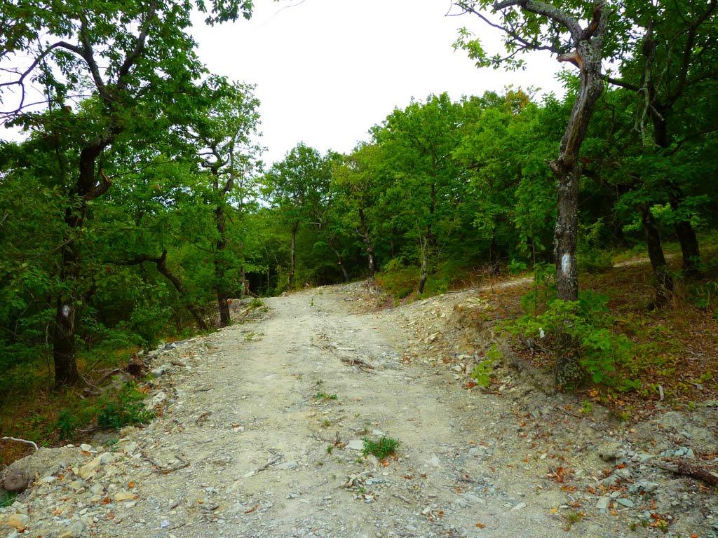 Урочище Сосновая щель в Архипо-Осиповке