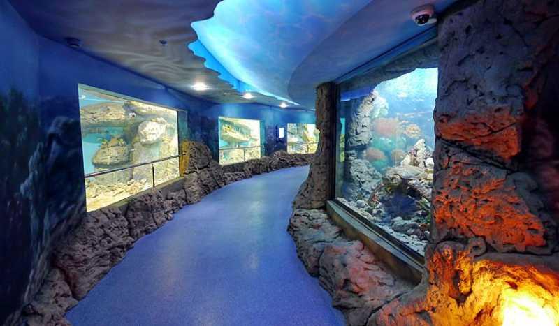 Океанариум в городе Геленджик