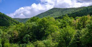 Лес и ущелье