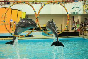 Дельфинарий в городе Геленджик
